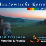 Ventrikel & Potency